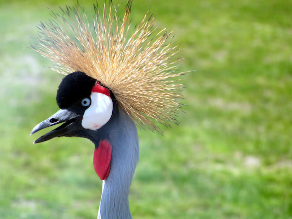 spiky-hair-crane