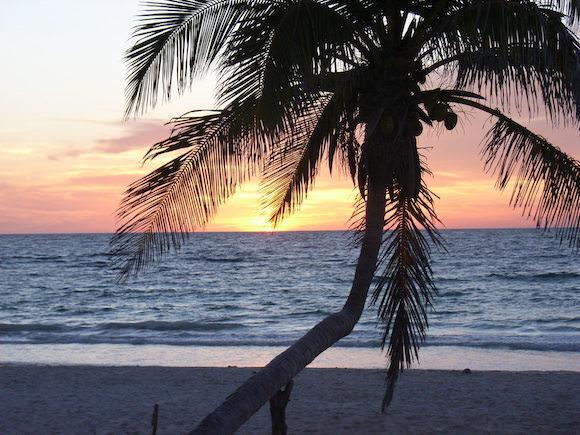 Palme Mexiko